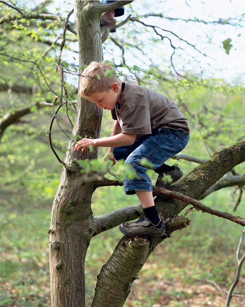Forest School Risk Benefit Assessment